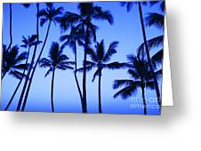 Coconut Palms At Dawn Greeting Card