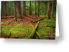 Coeur D'alene Forest Greeting Card