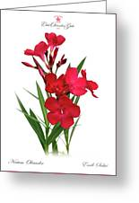 Cog  Nerium Oleander Emile Sahut Greeting Card