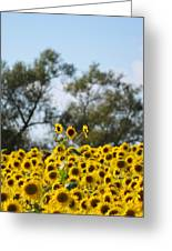 Colby Farms Sunflower Field Newbury Ma Standing Tall Greeting Card