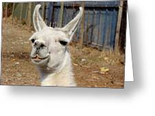Colchagua Valley Lama Greeting Card