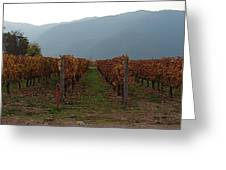 Colchagua Valley Vinyard II Greeting Card