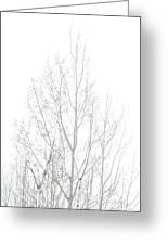 Cold Birch Greeting Card