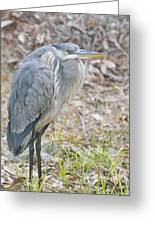 Cold Blue Heron Greeting Card