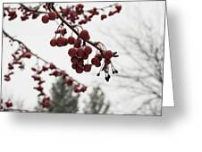 Cold Crabapples Greeting Card