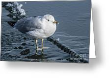 Cold Feet Greeting Card
