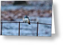 Cold Fledgling Greeting Card