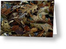 Cold Leaves Greeting Card