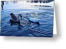 Cold Morning Swim 2 Greeting Card