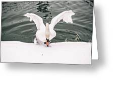 Cold Water Greeting Card