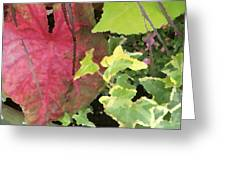 Coleus And Ivy Greeting Card