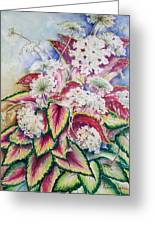 Coleus And Queen Anne Greeting Card