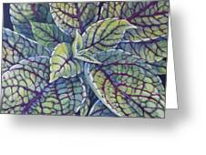Coleus Leaves Greeting Card