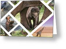 Collage Of Animals From Tanzania Greeting Card