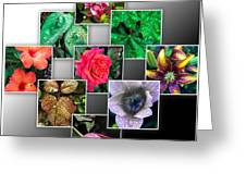 Collage Of Spring Flowers Greeting Card