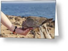 Collared Dove Feeding From A Hand Greeting Card