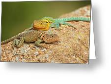 Collared Lizards Greeting Card