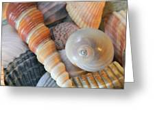 Collecting Shells Greeting Card