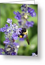 Collection Of Pollen Greeting Card