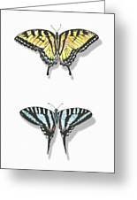 Collection Of Two Butterflies Greeting Card