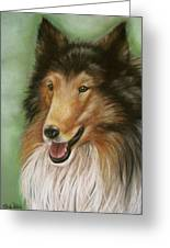 Collie Greeting Card