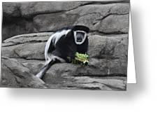 Colobus Monkey Greeting Card