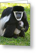 Colobus Monkey With Baby Greeting Card