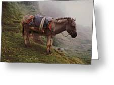 Colombian Burro In The Fog Greeting Card