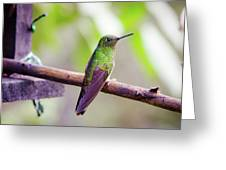 Colombian Hummingbird Greeting Card
