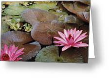 Colombian Pink Lillies Greeting Card