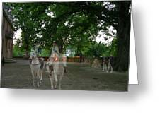 Colonial Ghost In Williamsburg Greeting Card
