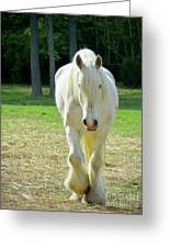 Colonial Horse In Williamsburg Greeting Card