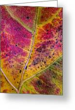 Color And Texture Greeting Card