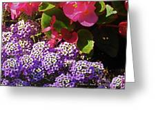Color Combination Flowers Cc63 Greeting Card
