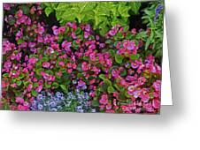 Color Combination Flowers Cc73 Greeting Card