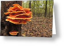 Color In The Woods Greeting Card