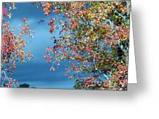 Color Me Beautiful Greeting Card