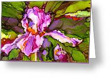 Color Me Iris Greeting Card
