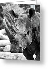 Color Me Rhino Greeting Card
