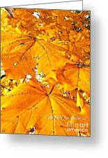Color Of The Leaves Greeting Card