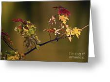 Color On A Stick Greeting Card