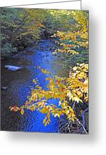 Color On Big Cataloochee Creek Greeting Card