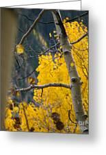 Colorado Aspen In Fall Greeting Card