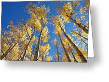 Colorado Aspen Greeting Card