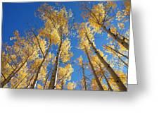 Colorado Aspen Greeting Card