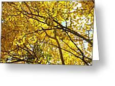 Colorado Aspens In Fall Greeting Card