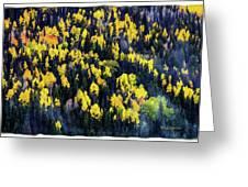 Colorado Autumn #5 Greeting Card