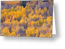 Colorado Autumn Trees Greeting Card