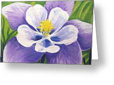 Colorado Columbine Greeting Card