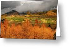 Colorado Fall Colors  Greeting Card